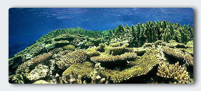 The living reef on the edge of the cavern shown above. Here the daily coral behavior deepens the caverns, leaving traces of each day's activities like memories of Sea. © http://www.thread-of-awareness-in-chaos.com/order.html