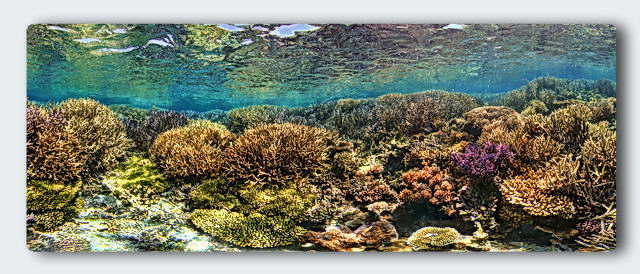 coral thickets